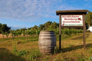 Nördlichster Weinberg Deutschlands in Loddin auf Usedom - Fischrestaurant Waterblick